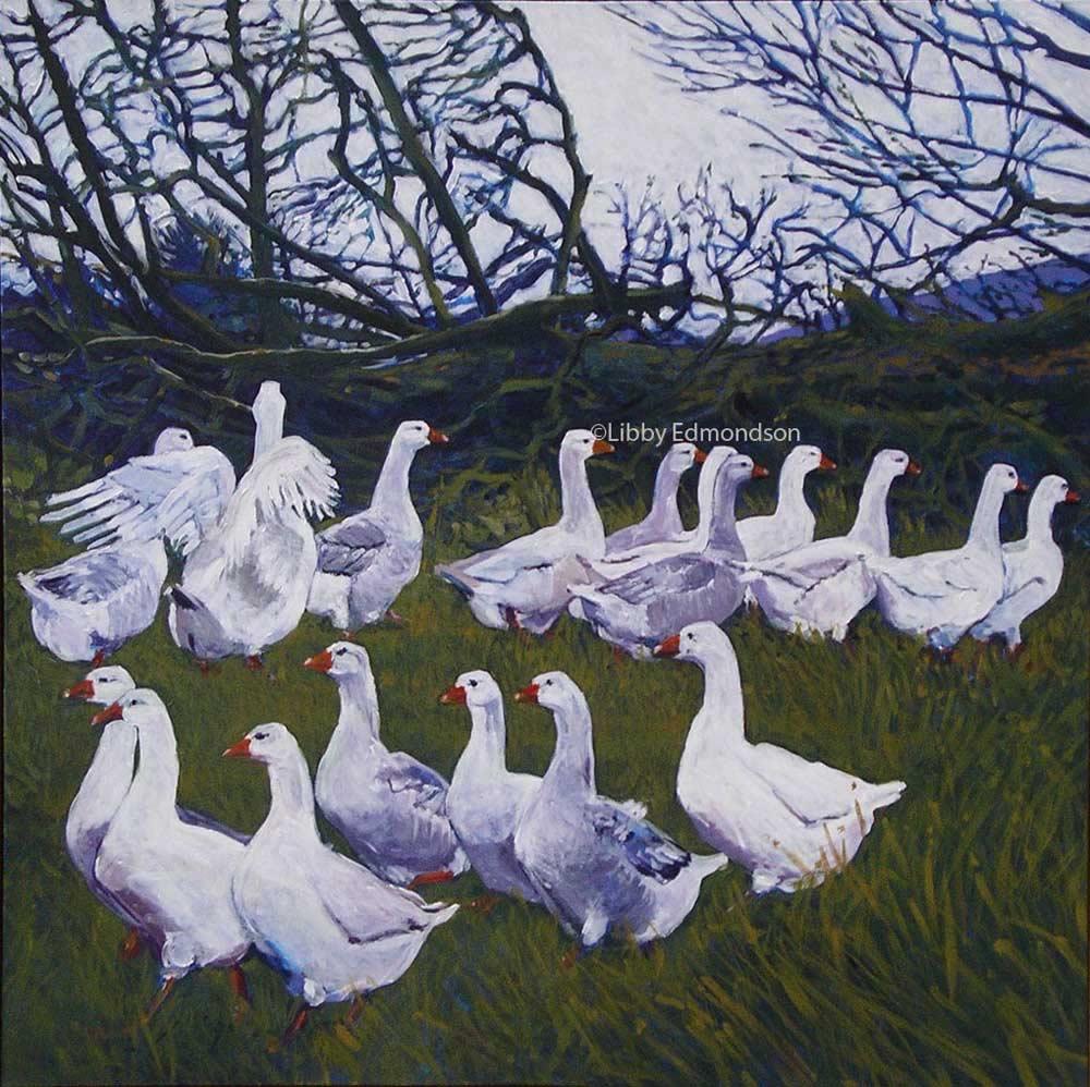 57.Bampton Geese 1